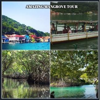 Amazing Mangrove Tour