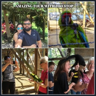 Amazing Tour With Zoo Stop