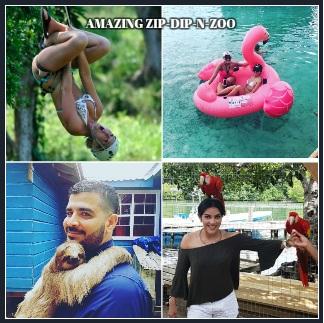 Amazing Zip-Dip-N-Zoo